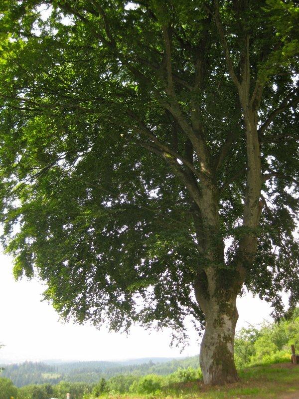 Le journal intime d'un arbre (Didier Van Cauwelaert)