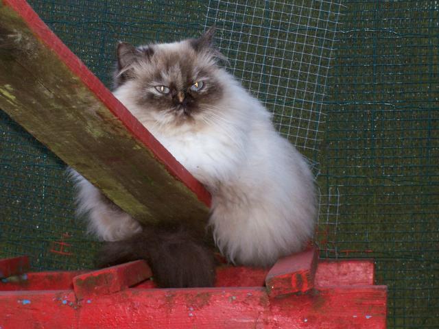 Je me présente Urielle qui vient de la chatterie du jardin d'eden
