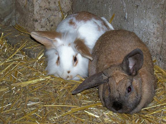 et ici nous sommes deux lapines qui s'entendent très bien et on à 11 mois