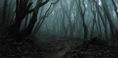 Résultats de recherche d'images pour «foret sombre nuit»