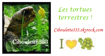 Blog n°6
