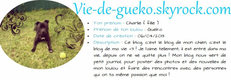 Blog n°11