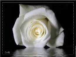 toi  qui t en va mon tendre amour.......... dis ?... quand reviendras tu?.............