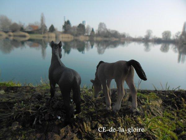 """""""Monter un cheval vous donne un goût de liberté """"  Helen Thomson"""