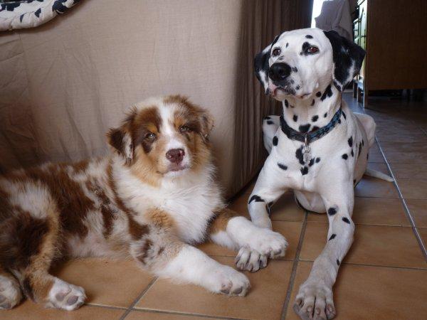 Gelisko avec sa soeur Luscan