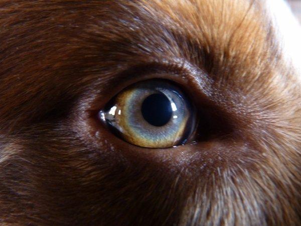 Les beaux  yeux de mon cul d'ours mix de son pere et de sa mere
