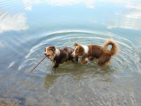 photos du 24.07.2011 au lac d'égligny (77) avec sa copine fidji ( rouge tri)