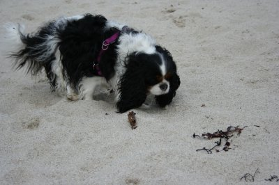 Dell à la plage