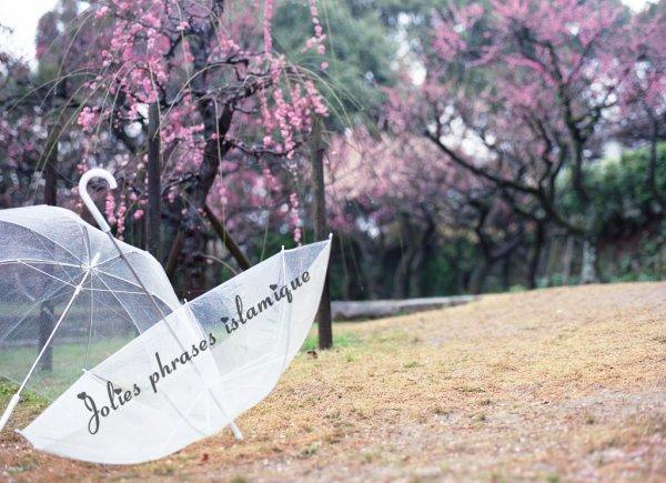 """""""La pluie de tes insultes,n'atteint pas le parapluie de mon indifférence""""."""