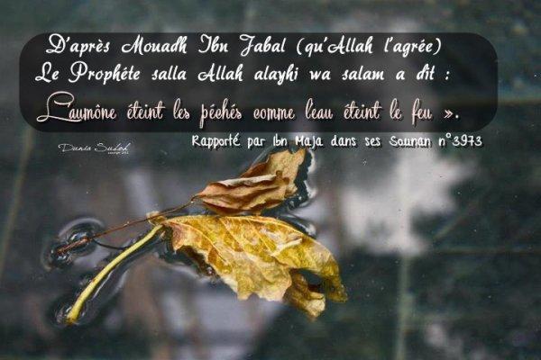 D'après Mouadh Ibn Jabal (qu'Allah l'agrée), le Prophète (que la prière d'Allah et son salut soient sur lui) a dit: « L'aumône éteint les péchés comme l'eau éteint le feu ». (Rapporté par Ibn Maja dans ses Sounan n°3973 et authentifié par Cheikh Albani dans sa correction de Sounan Ibn Maja)