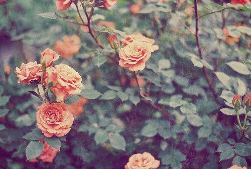 Yazîd Ibn Maysarah a dit :  « Les pleurs naissent de sept choses : la joie, la tristesse, l'effroi, la douleur, l'ostentation, la reconaissance, et les pleurs naissant de la crainte d'Allah sont ceux dont les larmes éteignent des montagnes de feu. »  [Al-Hilyah (5/235)]