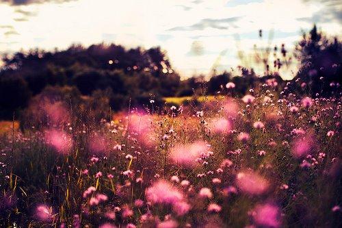"""Yusuf ibn Asbat a dit : """"Le véridique a 3 qualités : la douceur, la beauté, et la prestance.""""  Source : As-Siyar 9/170"""