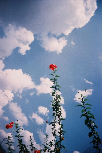 Ibn al Qayyim (m.751H) rahimahullâh a dit :  Votre vie au moment présent est entre le passé et le futur.