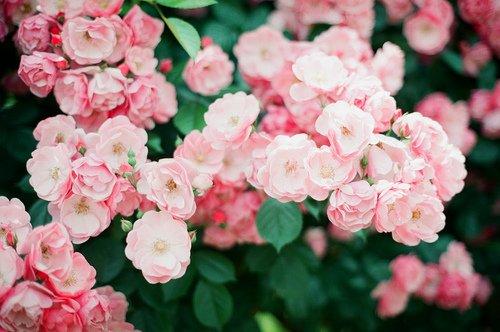 La terre de la nature saine est spacieuse et accepte ce qu'on y plante. Si on y plante l'arbre de la foi et de la piété, il donne une douceur éternelle, et si on y plante l'arbre de l'ignorance et des passions, tous ses fruits seront amers. [Ibn Qayyim Al-Jawziyyah]