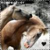 HorsesEver