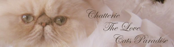 http://www.Chatteriethelovecatsparadise.be