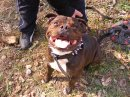 Photo de passionstaffie3109