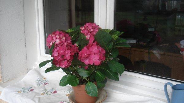 bon jeudi  à toutes et tous avec les fleurs que j'ai offerte à mon mari