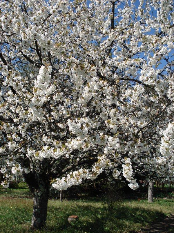 bon lundi à toutes et tous (C'est le printemps, enfin !)