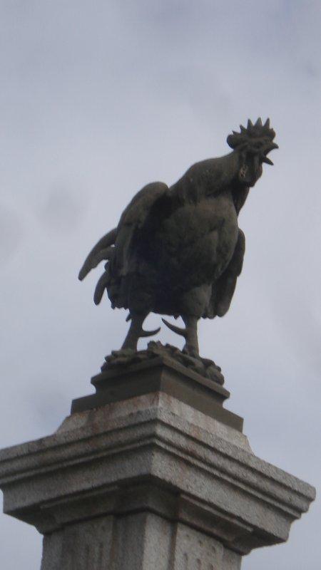 Un beau coq gaulois