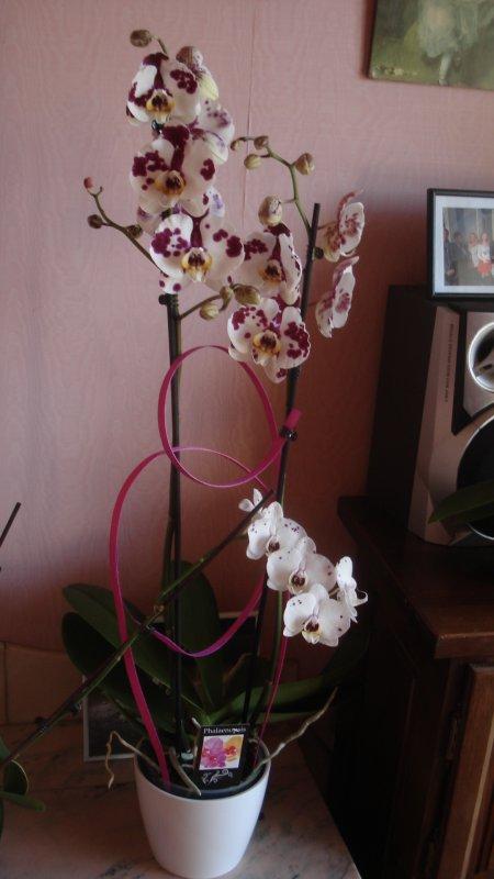 Bon Jeudi avec les orchidées offertes par mon fils pour la même occasion
