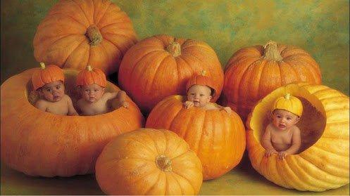 des bébés en citrouilles