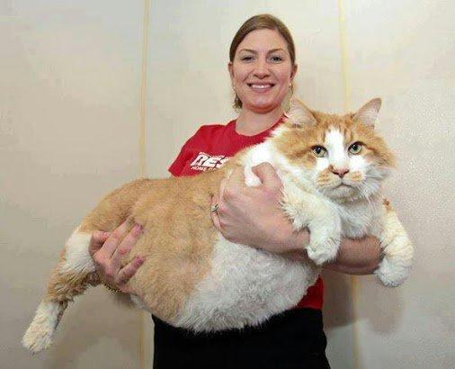voici un minou géant et vous n'avez vous un