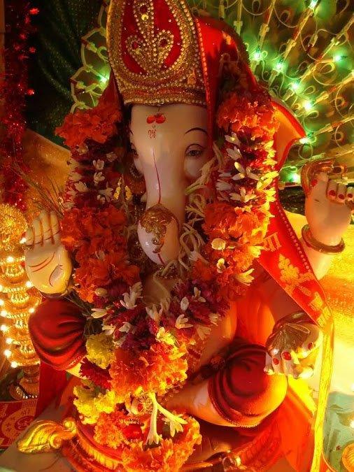 très beau éléphant