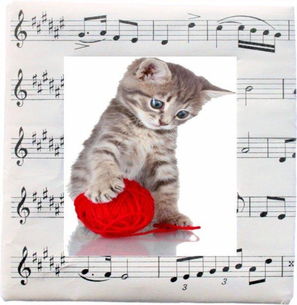 un petit minou toute en musique