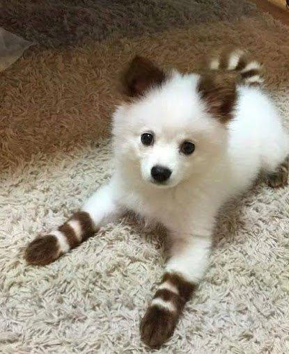 très beaux chien