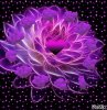 une fleur en coeur