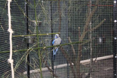 pennant bleu