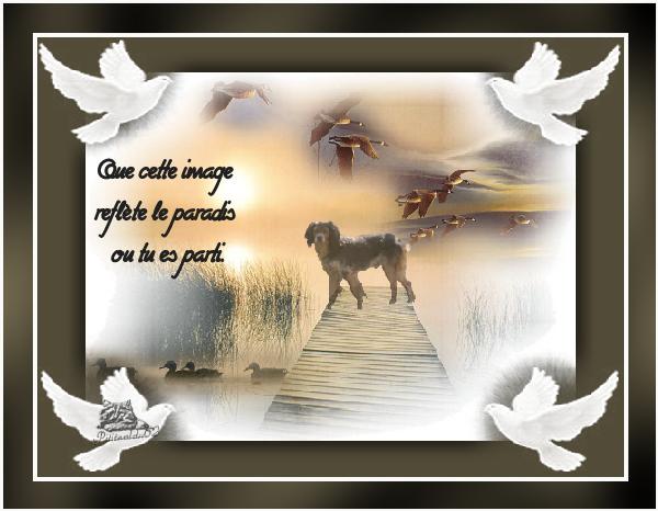 Créa perso, en mémoire de Tex, le chien de mon Kiki