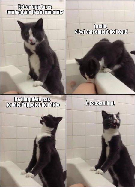 Ah, les chats...