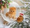Adorable petit chat qui regarde l'oiseau posé sur sa branche.