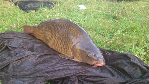 Pêche du soir...13kg
