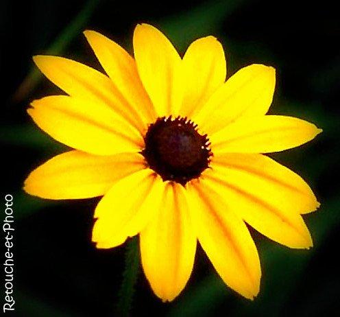 Fleure jaune.