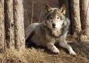 Photo de WolfSurvival21