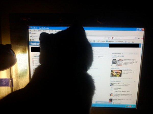 Mon chat me pique mon compte fb :D