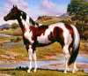 jdr-les-chevaux77