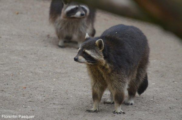 Zoo d'heidelberg