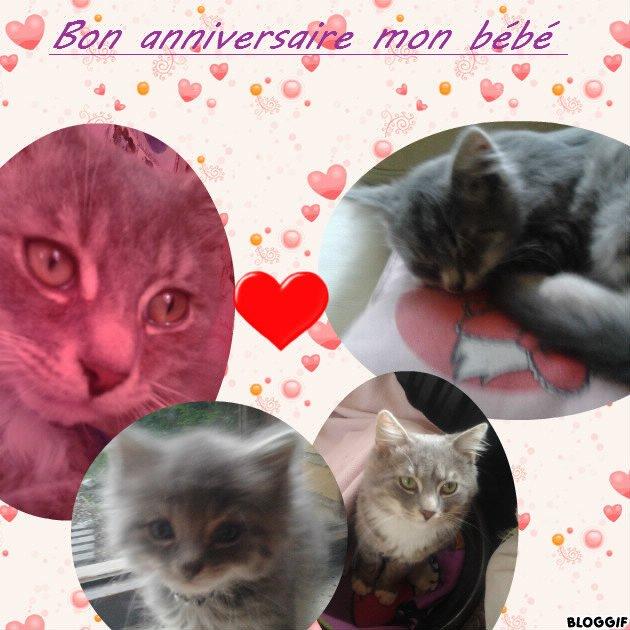 pour l'anniversaire de mon chat