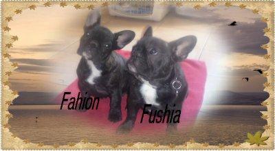 Message d'Adieu de Fushia et Fashion Victim