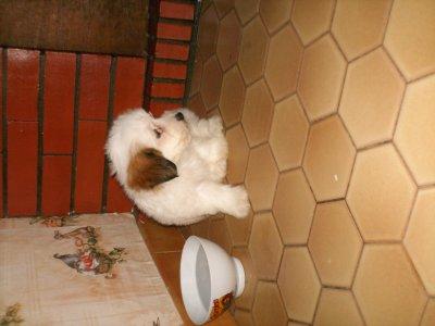 notre nouvo chien