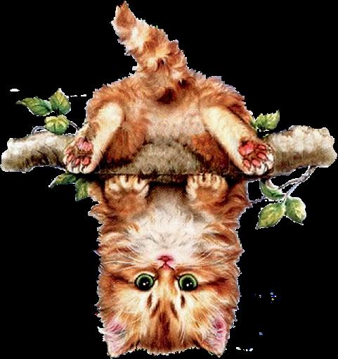 """"""" Abigail """" Mon petit chaton ..."""
