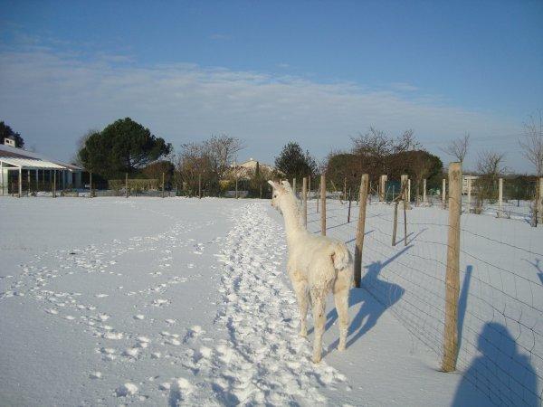 NOUVELLE PHOTO  sous la neige le 06 fevrier