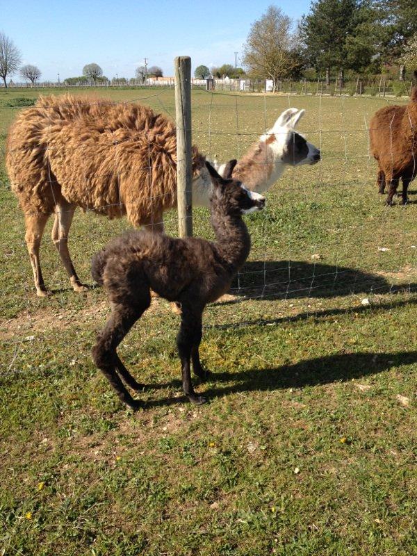 dans la nuit de dimanche à lundi  Euryale a fait son bebe  une femelle