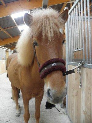 Les doubles poneys
