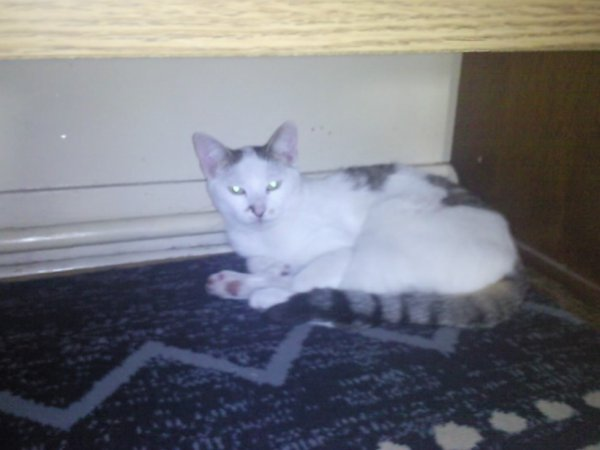 ma nouvelle chatte