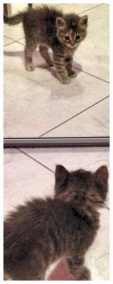 P.1 : Darla dans sa nouvelle maison